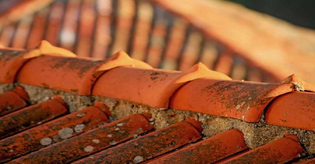 molds in roof