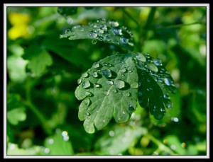 watering your plants is one of the best way to keep you plants survive during summer season