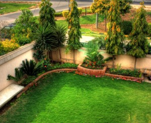 Regular maintenance for your garden to maintain in tip-top shape.