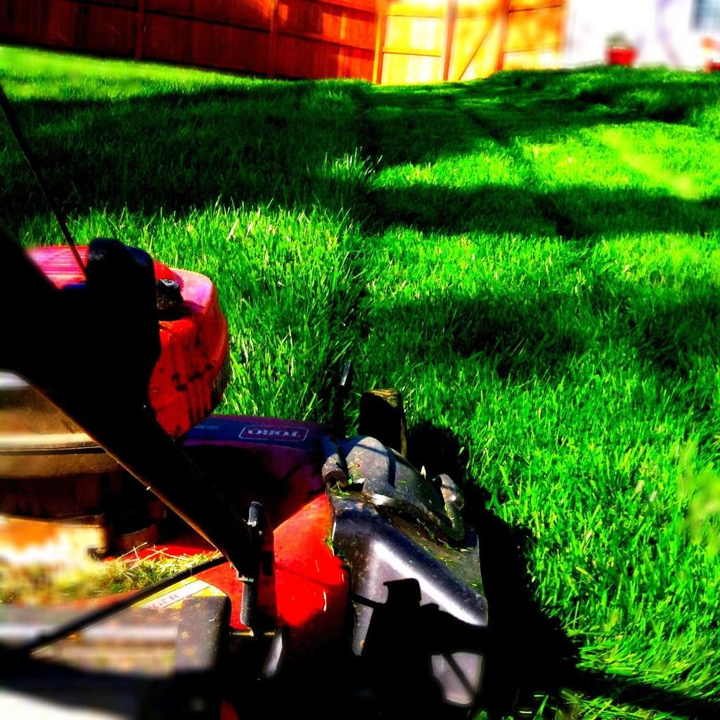 Healthy green lawn.