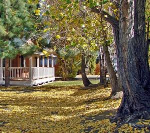 Fallen leaves at yard