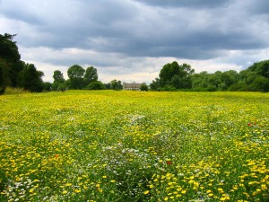 Tips for a successful meadow garden.